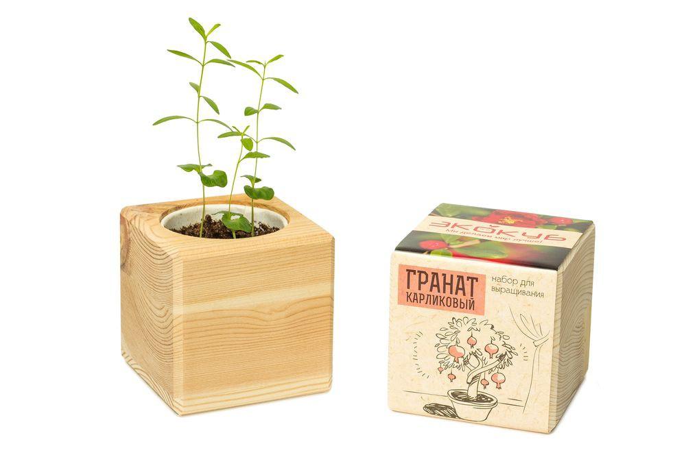 Набор для выращивания «Экокуб», гранат
